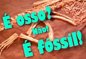"""Nova edição da oficina """"É osso? Não! É fóssil!"""""""