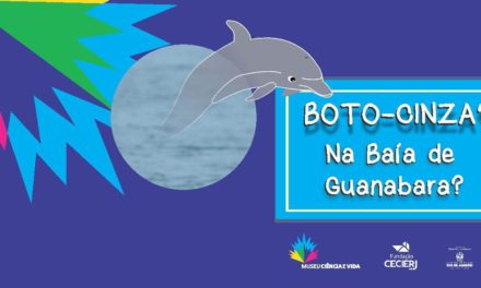 Botos-cinza? E na Baía de Guanabara?
